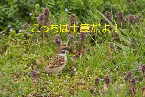 100_20130329214100.jpg