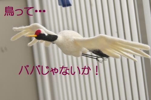 100_20130331171607.jpg