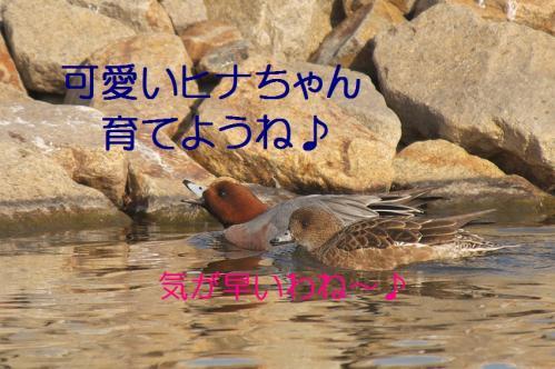 100_20130416215444.jpg