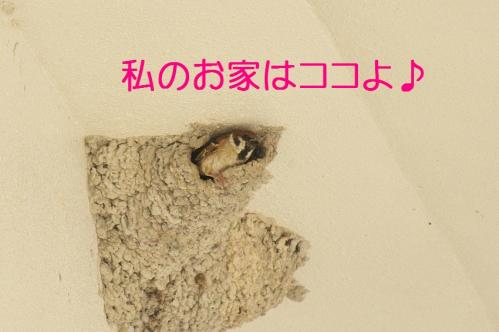 100_20130430194348.jpg