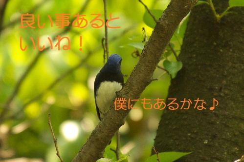 100_20130502205930.jpg
