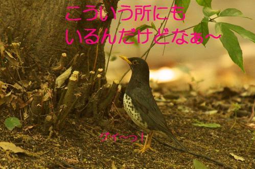100_20130503222114.jpg