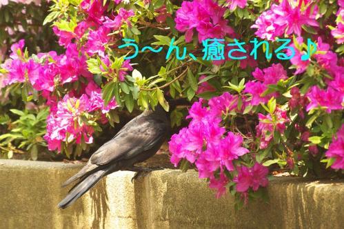 100_20130506201537.jpg
