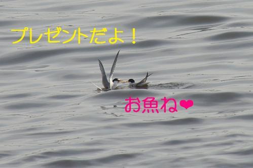 100_20130528185905.jpg