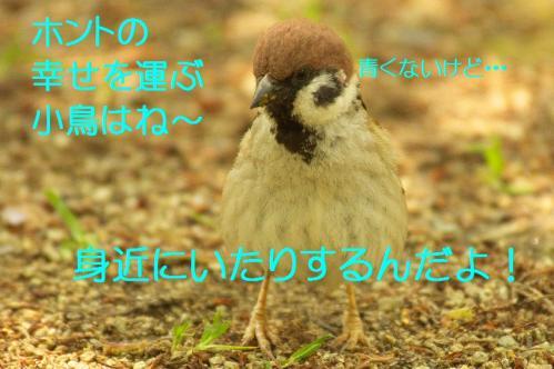 105_20130502210015.jpg