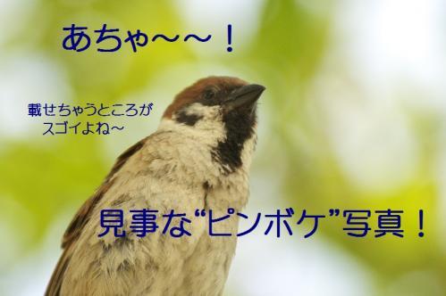 105_20130527215559.jpg