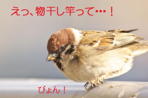 110_20130305204432.jpg