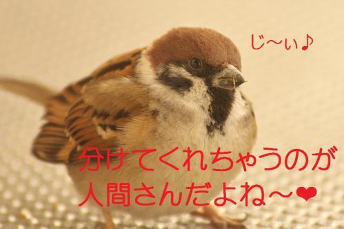 110_20130308225113.jpg