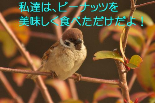 110_20130311210731.jpg