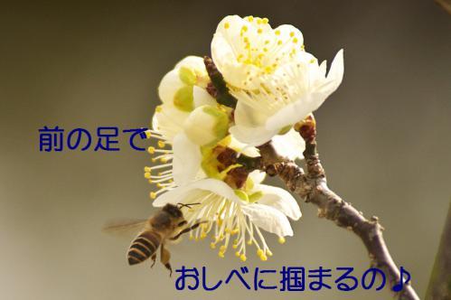 110_20130312194754.jpg