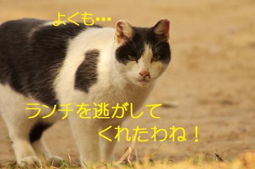 110_20130313215416.jpg