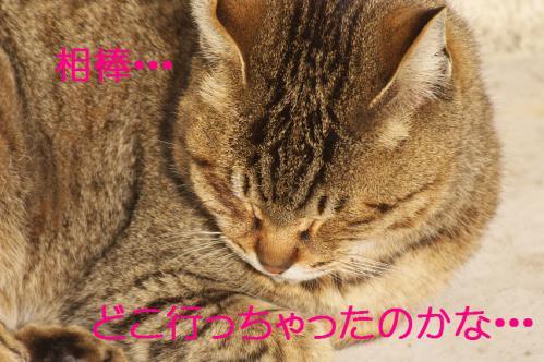 110_20130318215700.jpg