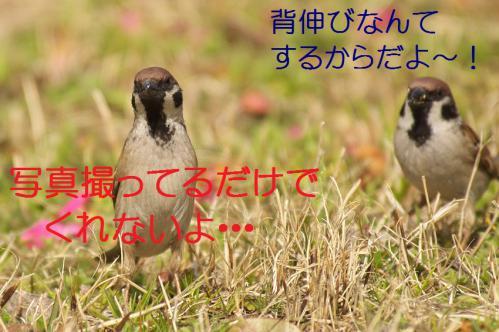 110_20130319203847.jpg