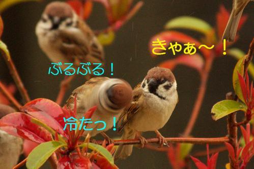 110_20130320211228.jpg