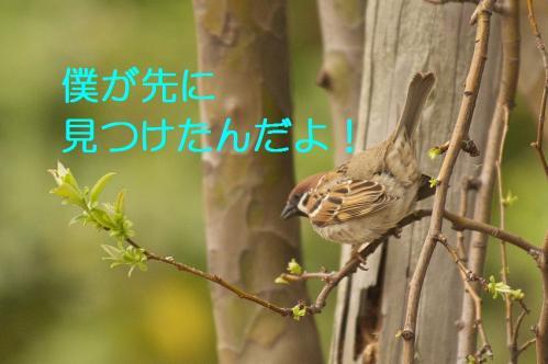 110_20130327210501.jpg