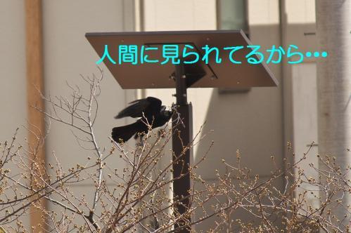 110_20130330214956.jpg
