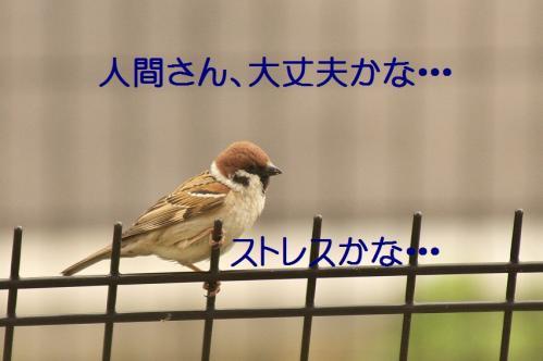 110_20130331171656.jpg