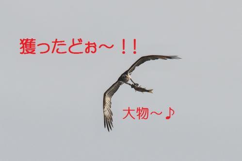 110_20130527215601.jpg