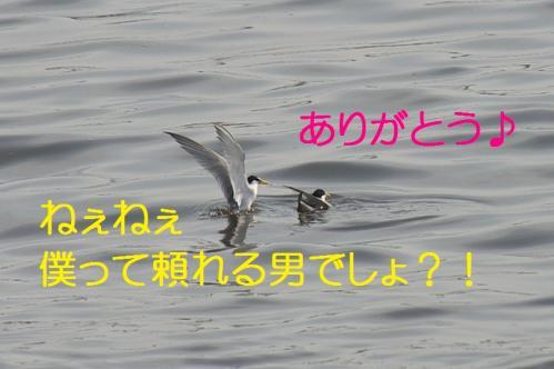 110_20130528185908.jpg