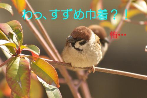 115_20130302042924.jpg