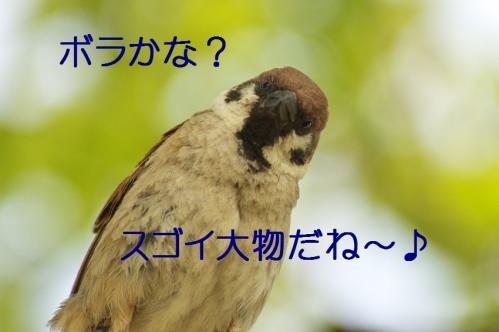 115_20130527215604.jpg