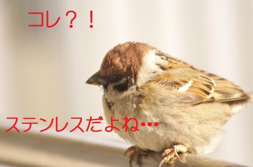 120_20130305204435.jpg