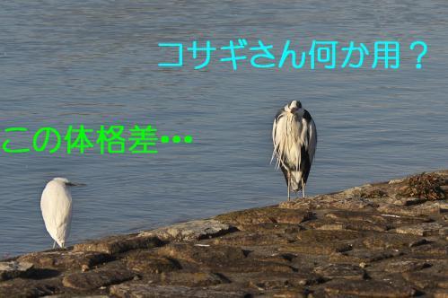 120_20130309224546.jpg