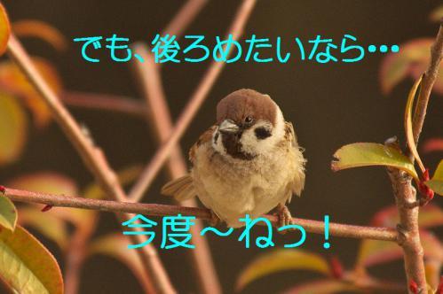 120_20130311210735.jpg