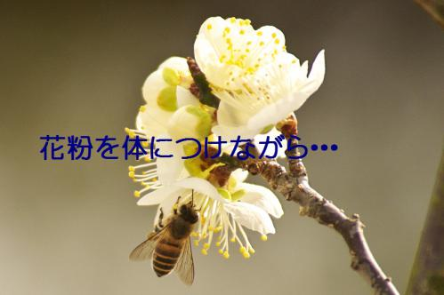120_20130312194757.jpg