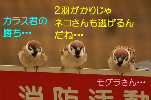 120_20130316194030.jpg