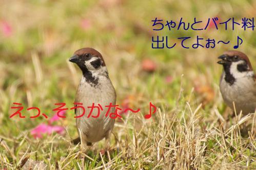 120_20130319203849.jpg