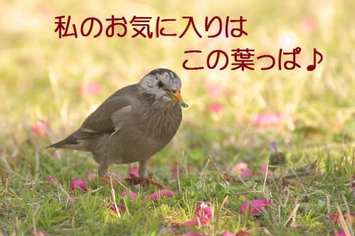 120_20130322224802.jpg