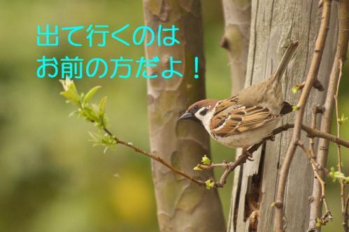 120_20130327210519.jpg