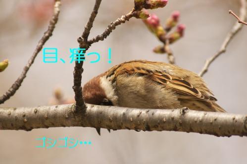 120_20130328201441.jpg