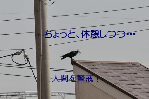 120_20130330215004.jpg