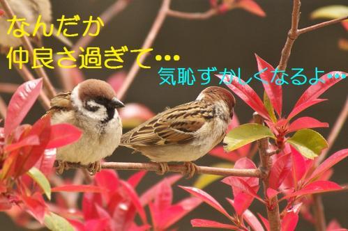 120_20130416215448.jpg