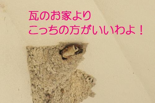 120_20130430194442.jpg