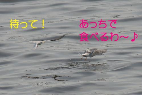 120_20130528185911.jpg