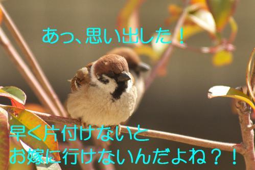 125_20130302042930.jpg
