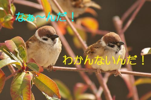 130_20130223222020.jpg