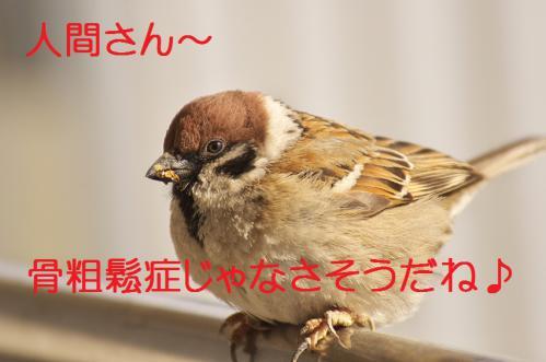 130_20130305204437.jpg