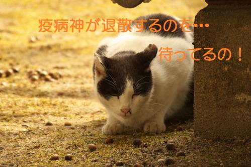 130_20130313215423.jpg