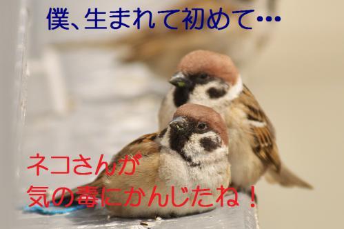 130_20130318215706.jpg