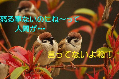 130_20130320211241.jpg