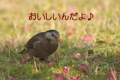 130_20130322224805.jpg