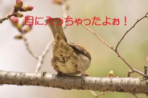 130_20130327210536.jpg