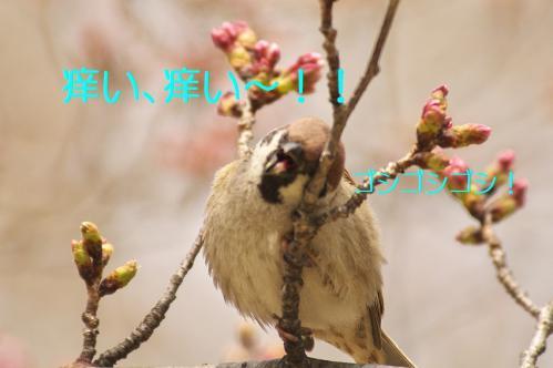 130_20130328201305.jpg