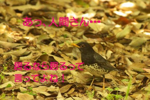 130_20130503222346.jpg