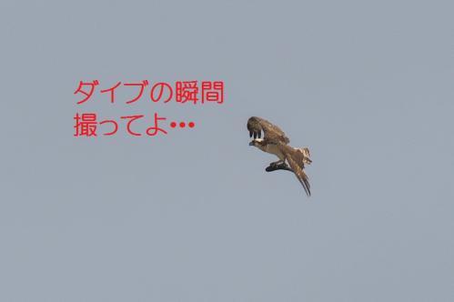 130_20130527215609.jpg