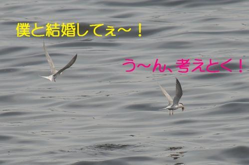 130_20130528185914.jpg